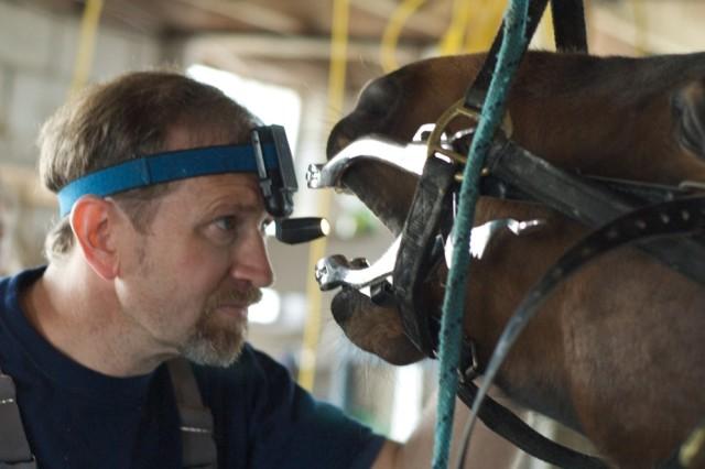 dentista equino